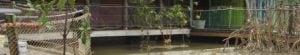 Afbeelding gemonteerde RVS staalkabels Mangrove-verblijf Burgers Zoo in Arnhem