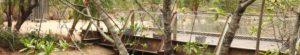 Afbeelding RVS staalkabels Burgers Zoo Arnhem