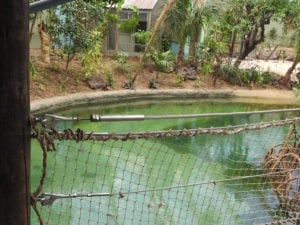 RVS staalkabel met eindverbinding mangrove-verblijf Burgers Zoo