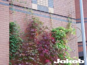 Gevelbegroeiing steense muur op basis van RVS staalkabelnetten
