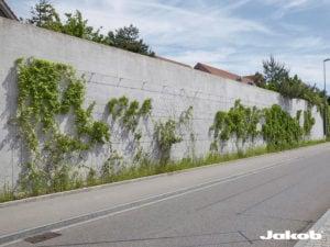 Begroeiing steense muur door middel van RVS staalkabelnetten