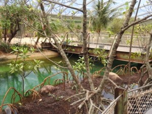 RVS staalkabels mangrove-verblijf Burgers Zoo